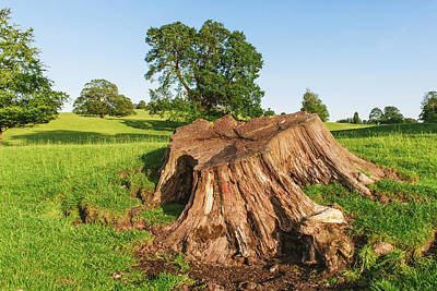 Keith Richards - close up of a Large tree stump in Dallam Park Milnthorpe UK by David Ridley