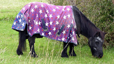 Ethereal - Close-up of black horse wearing star patterned coat grazing in pasture. by Richard Griffin