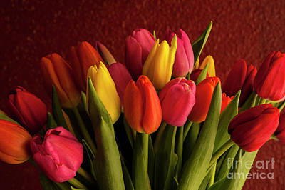 Still Life Royalty-Free and Rights-Managed Images - Close-up of Multicolored Tulips by Jim Corwin