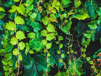 Unicorn Dust - Closeup Green Ivy Leaves Garden Texture Background by Tim LA