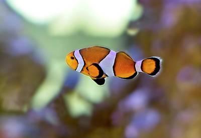 Have A Cupcake - Clownfish 3 by Douglas Barnett