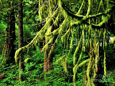 Mellow Yellow - Coastal Rain Forest in Alaska by Joe Ng