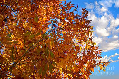 Photograph - Colorado Fall Tree by Sherry Little Fawn Schuessler