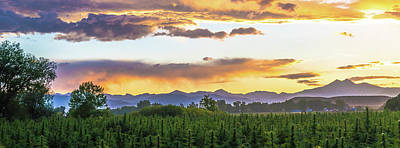 Landscapes Royalty-Free and Rights-Managed Images - Colorado Hemp Field Sunset 95 by Hemp Landscapes
