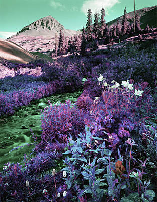 Surrealism Royalty-Free and Rights-Managed Images - Colorado Wildflowers - Surreal Art by Ahmet Asar by Celestial Images
