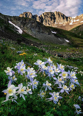 Grace Kelly - Columbines in the Mountains by David Soldano
