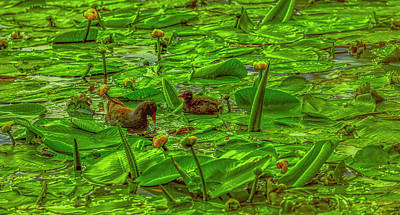 Crazy Cartoon Creatures - Common moorhen #j0 by Leif Sohlman