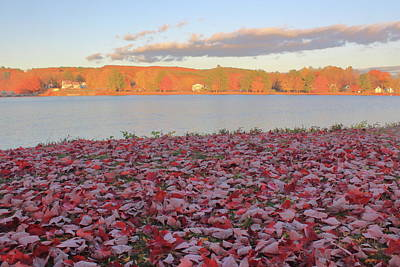 David Bowie Royalty Free Images - Connecticut River Leaf Drop Royalty-Free Image by John Burk