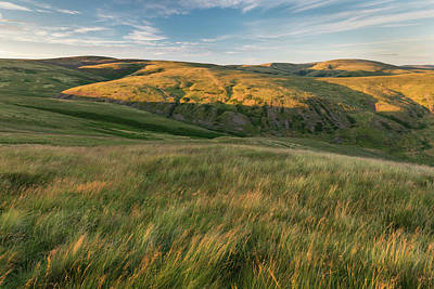 Photograph - Coquet Valley Grasslands by David Taylor