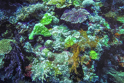 Photograph - DiveArt - Coral Reef by Ifototravel - Irene And Tony Isaacson