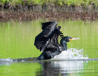 Pop Art Rights Managed Images - Cormorant Landing  Royalty-Free Image by John Ferris