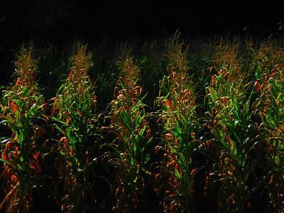 Photograph - Corn Rows by Michelle Hoffmann