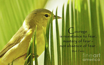 Animals Royalty-Free and Rights-Managed Images - Courage On the Palm by Debby Pueschel