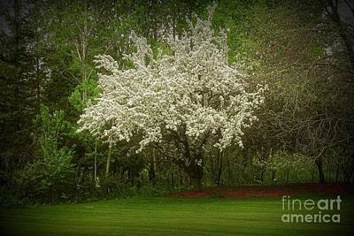 State Word Art - Crabapple Tree at the edge of the wood by Mary Machare