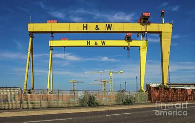 Photograph - Cranes by Jim Orr