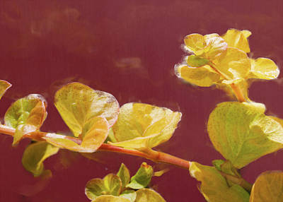 Old Masters - Creeping Jenny by David Beard