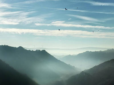 Comedian Drawings - Crows - Misty Morning Valley by Philip Openshaw