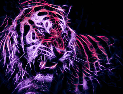 Sports Royalty-Free and Rights-Managed Images - CU Tiger Fire by Tim Kelley