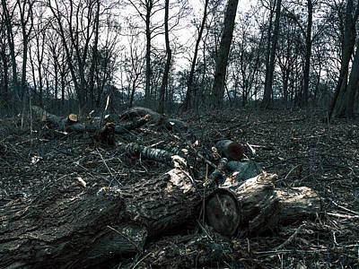 Photograph - Cut Wood in woodland by Sean Patrick Durham