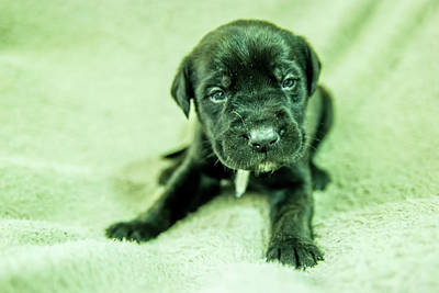 Royalty-Free and Rights-Managed Images - Cute puppy  by Jeff Swan