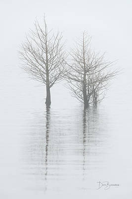 Dan Beauvais Royalty-Free and Rights-Managed Images - Cypress in Fog 0241 by Dan Beauvais