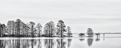 Vintage Pharmacy - Cypress Trees at Lake Mattamuskeet NWR by Bob Decker