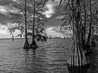Photograph - Cypress Trees at Pinopolis Point by Louis Dallara