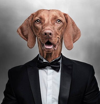 Colorful People Abstract Royalty Free Images - Vizsla Dog in Tuxedo Surreal Royalty-Free Image by Barroa Artworks