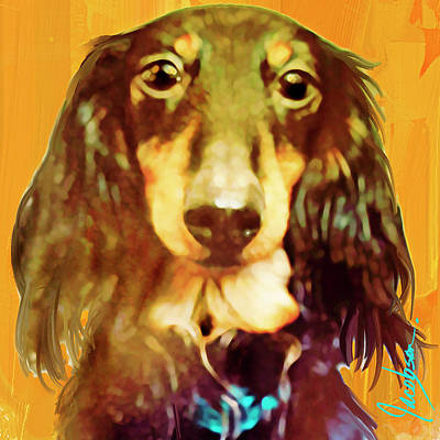 Mixed Media - Dachshund Long Haired by Jackie Jacobson