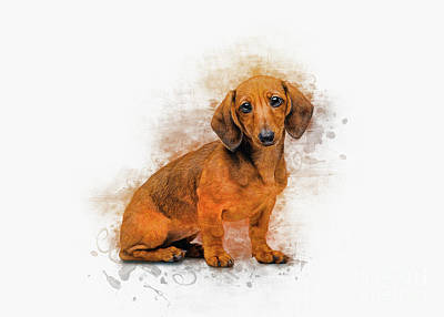 Animals Digital Art - Dachshund Love by Ian Mitchell