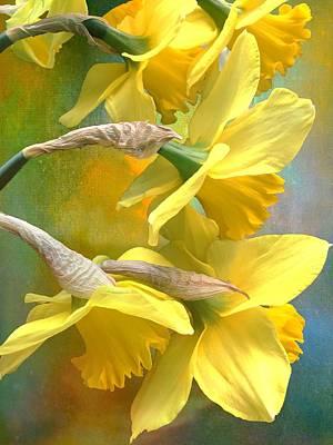 Anchor Down - Daffodil Amaryllis by Christina Ford