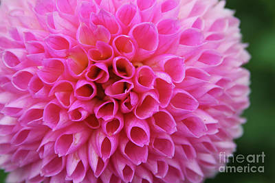 Abstract Shapes Janice Austin Royalty Free Images - Dahlia 3933 Royalty-Free Image by Jack Schultz