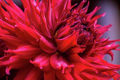 Fruits And Vegetables Still Life - Dahlia Drama by Mary Ann Artz