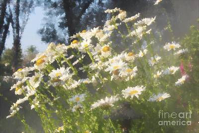 David Bowie Royalty Free Images - Daisies at the Vineyard Royalty-Free Image by Katherine Erickson