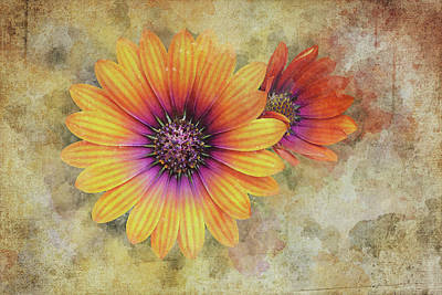 Abstract Oil Paintings Color Pattern And Texture - Daisies by Scott Norris