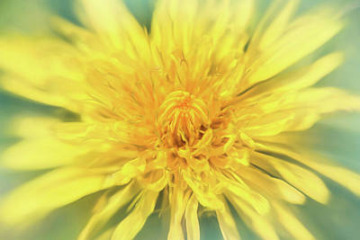 Minimalist Movie Quotes - Dandelion Head  by Carol Japp