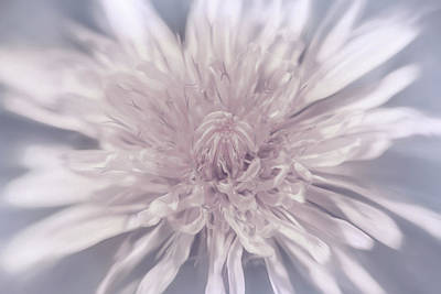 Minimalist Movie Quotes - Dandelion Head Delicate Pinks by Carol Japp