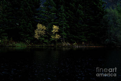 Kim Fearheiley Photography Royalty Free Images - Dark Reflections Royalty-Free Image by Roland Stanke