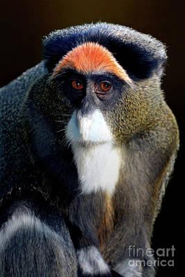 Keith Richards - De Brazzas monkey by Savannah Gibbs