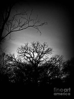 Frank J Casella Royalty-Free and Rights-Managed Images - December Sunset Silhouette - Black and White by Frank J Casella