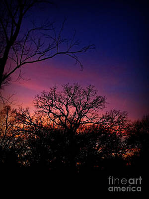 Frank J Casella Royalty-Free and Rights-Managed Images - December Sunset Silhouette by Frank J Casella