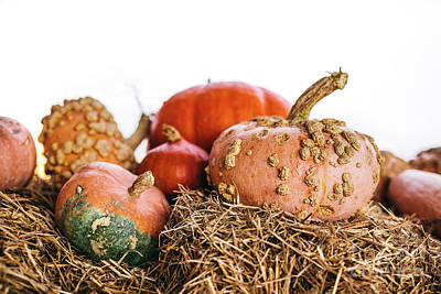 Anne Geddes Florals - Decorative pumpkins on hay on white background by Michal Bednarek