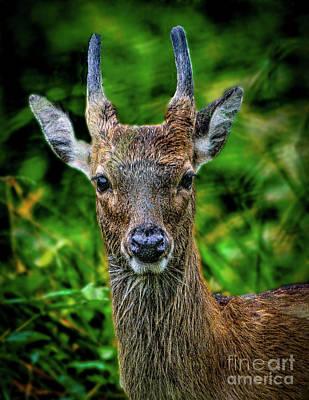 Animals Photos - Deer at Blackwater by Nick Zelinsky Jr