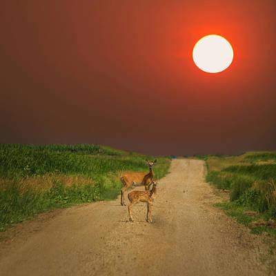 Studio Grafika Zodiac - Deer Mama by Aaron J Groen
