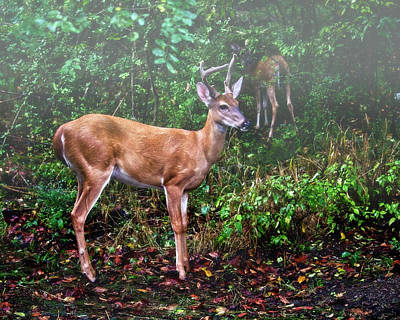 Billiard Balls Royalty Free Images - Deer On a Misty Morning Royalty-Free Image by Laura Vilandre