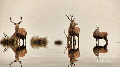 Photograph - Deer On The Water by Dave Harnetty