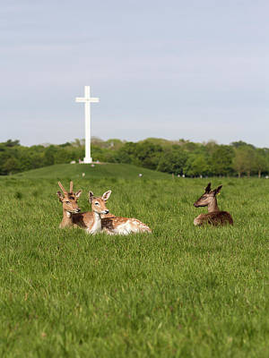 Landscape Photos Chad Dutson - Deer relaxing at the park with papal cross by Victor Vega