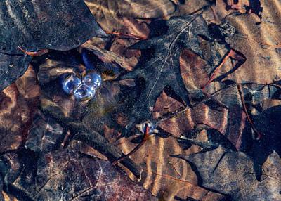 Photograph - Delaware River Scene by Amelia Pearn