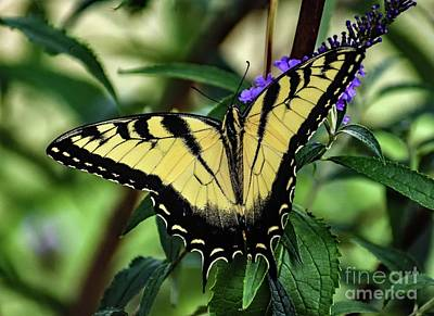 Vintage Buick - Delicate Eastern Tiger Swallowtail by Cindy Treger