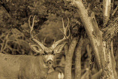 Firefighter Patents - Dirty Nose - Mule Deer Buck Antiqued by Renny Spencer
